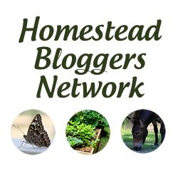 Best Homestead Websites