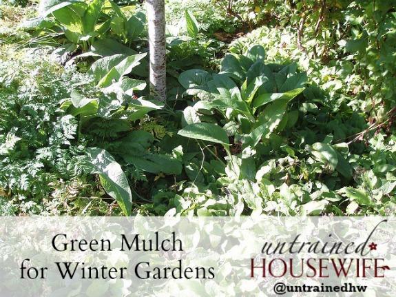 Green mulch for winter gardens