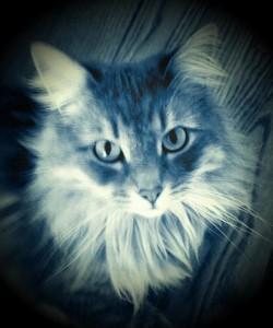 Feline Leukemia Virus (FeLV) in Cats
