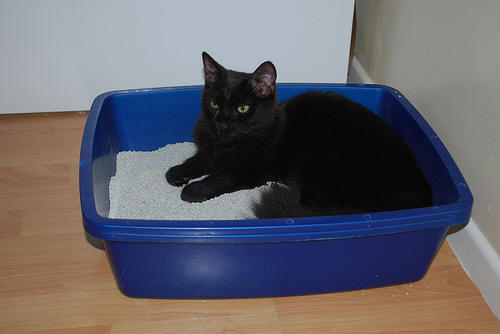 If your cat is peeing outside of the litter box, living with the ...