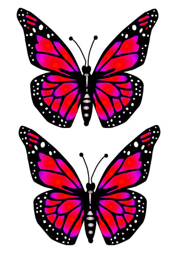 Big Butterfly Red Preview