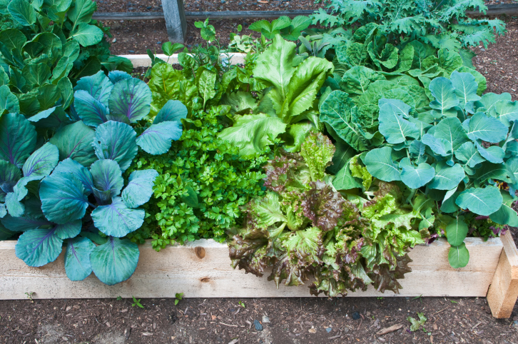No dig garden beds are easy, quick and effective in providing vegetables with all the nutrients they need. So here's my step by step approach to no dig ...
