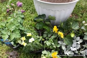 Creating and Planting a Spring Container for Part Shade