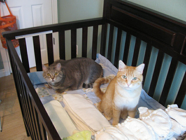 Cats in Baby's Crib
