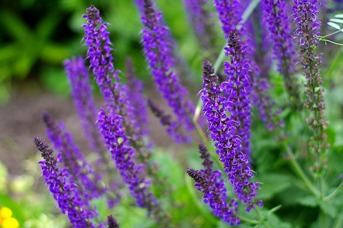 Easy to Grow Perennial Plants