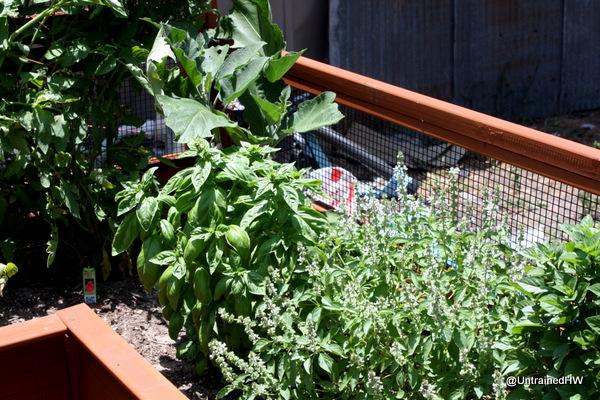 Building a Cedar Raised-Bed Planter
