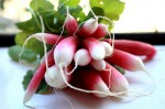radish2