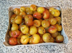 cherries for canning