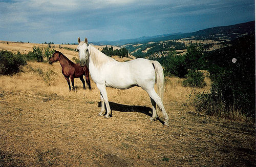 Horses and West Nile Virus