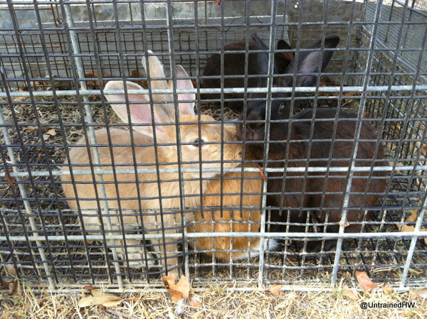"Easter bunnies in a cage - Why you shouldn't buy ""Easter rabbits"" for kids"