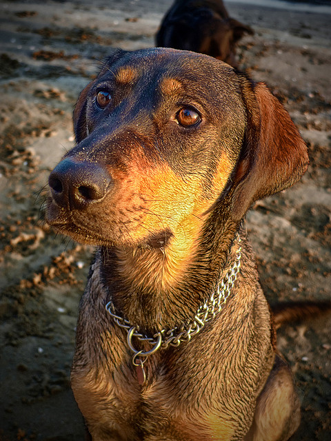 Home Remedies for Diarrhea in Dogs