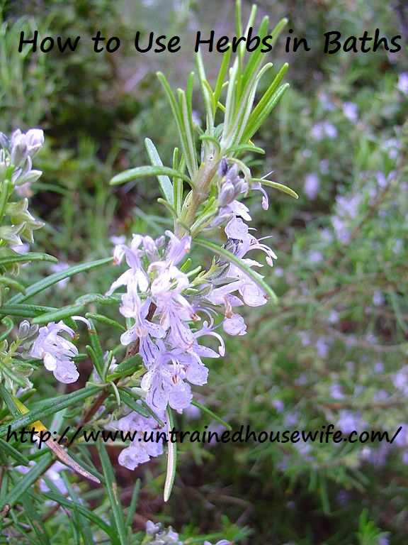 Rosmarinus Officinalis (Rosemary)