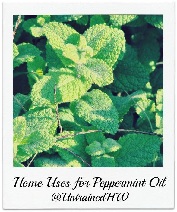 Peppermint (Mentha Piperita)