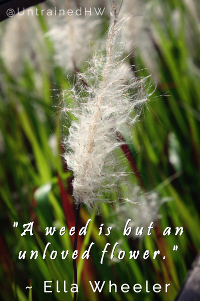 Unloved Flower - Weed Garden Quote Untrained Housewife