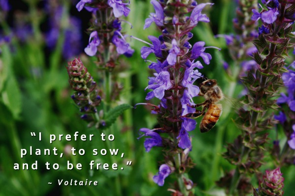 Plant Sow and Be Free Garden Quote at Untrained Housewife
