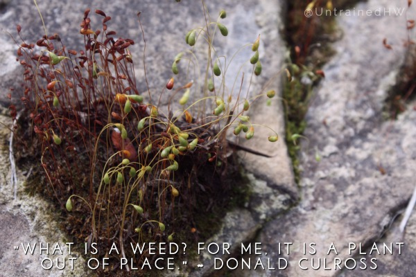 Weeds are plants out of place Garden Quote at Untrained Housewife