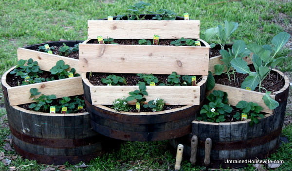 Strawberry Plant or Vertical Herb Garden