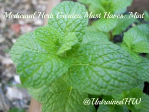 Medicinal Herb Garden Must Haves