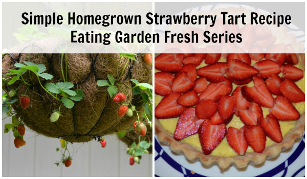 Simple Strawberry Tart Recipe