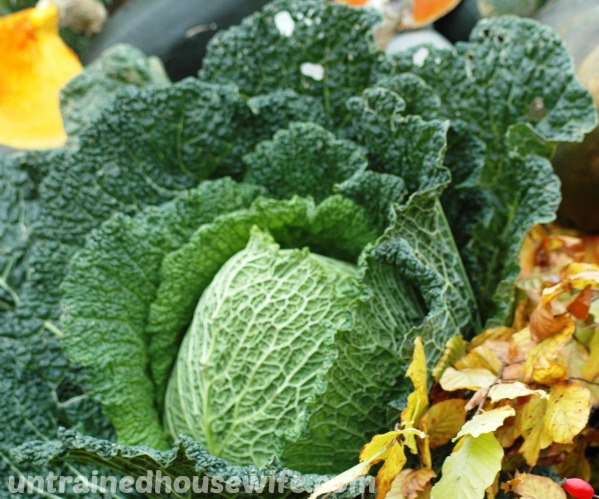 fresh head of cabbage next to brightly colored squash