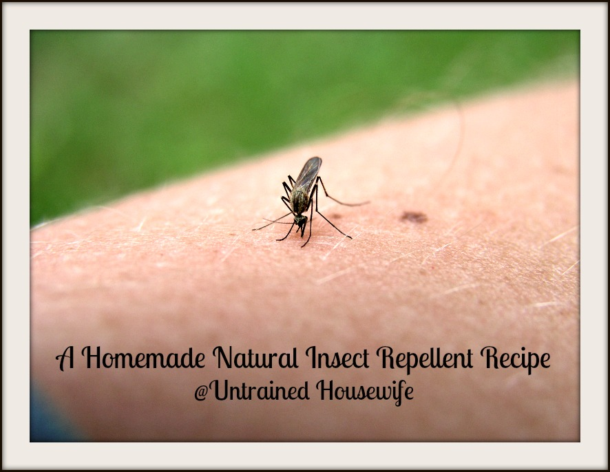 Natural Bug Spray Recipe