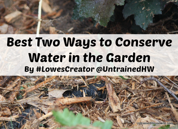 Water Conservation in Gardens