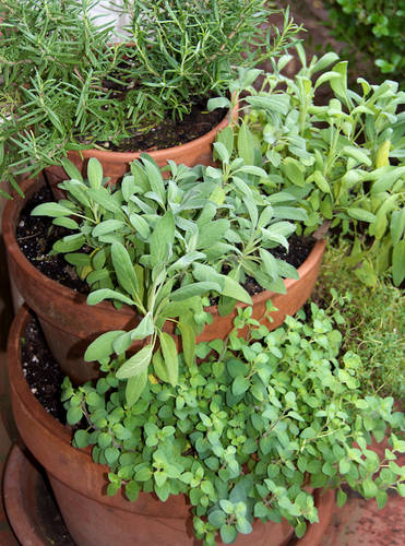 Vertical Herb Garden Idea for Small Space Gardening
