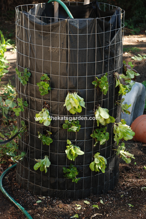 Vertical Vegetable Gardening Ideas vegetable garden design ideas vegetable gardening vegetable garden design vertical gardening vertical Lettuce Tower Vertical Vegetable Garden Idea