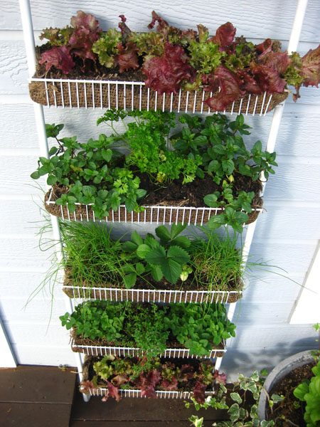 Vertical Vegetable Gardening Ideas vertical vegetable garden ideas Spice Rack Garden Vertical Vegetable Gardening Idea