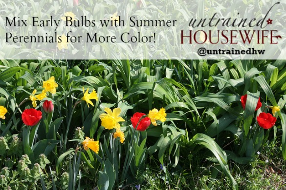 Summer perennials with early spring bulbs