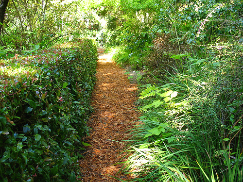 Garden pathway mulched in wood chips