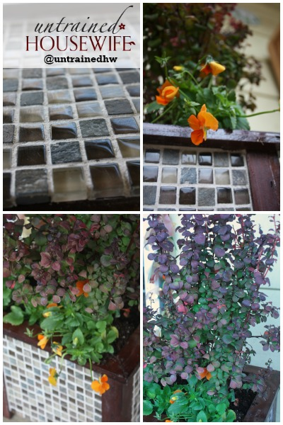 Grouted Tile in the Garden Planter with Finished Plants for Fall Color