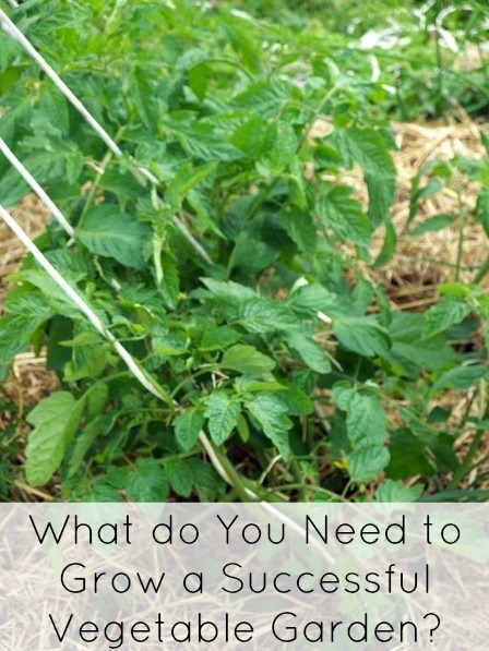 What do you need to grow vegetables successfully