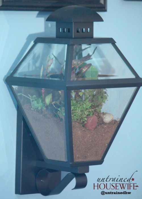 Hanging Terrarium From Repurposed Lantern