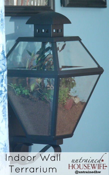 Indoor Wall Terrarium From Repurposed Lantern
