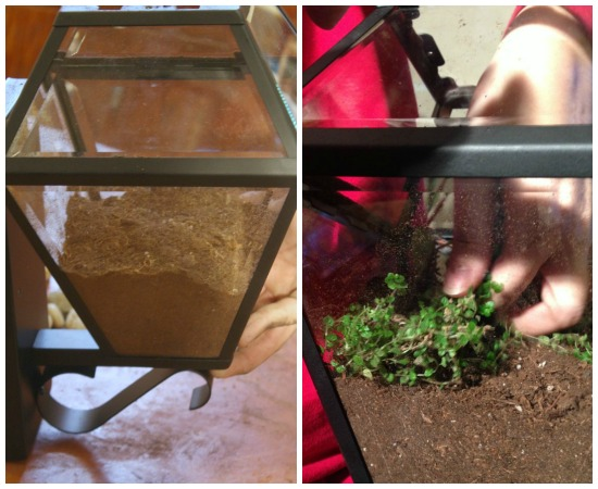 Planting the Glass Lantern