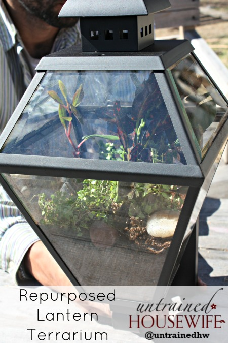 Repurposed Wall Lantern Terrarium