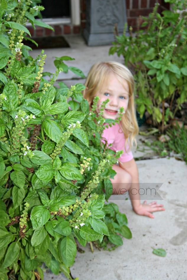 Grow your own basil