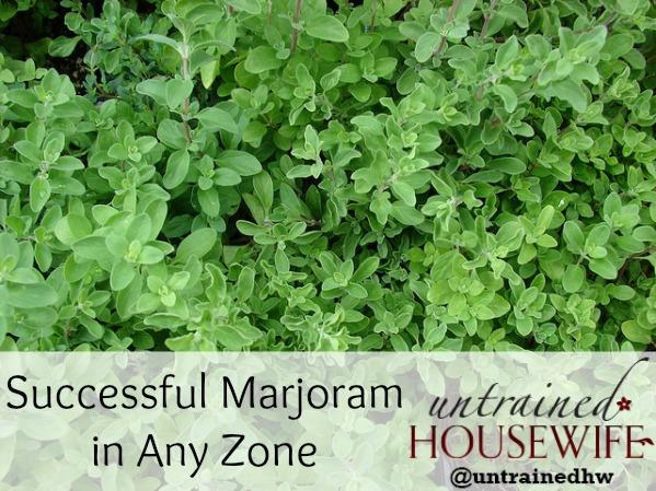 Growing Marjoram Successfully