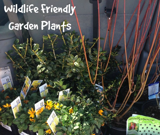 Wildlife Friendly Garden Plants